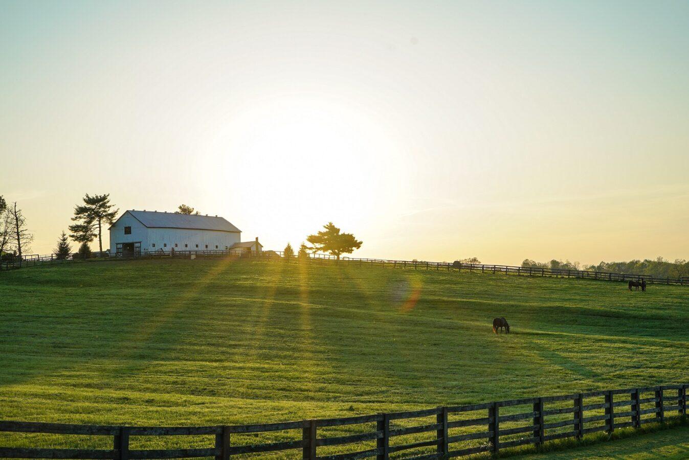 COVID Kentucky